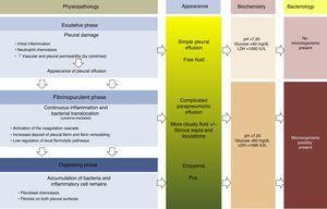 Physiopathology, appearance, biochemical parameters and microbiology of parapneumonic pleural effusion.