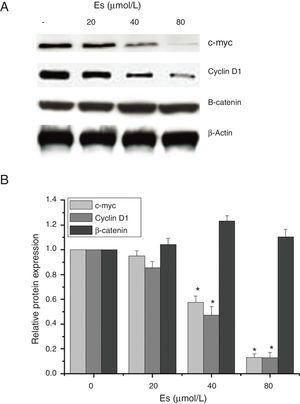 Esculetin inhibits the expression of target proteins, c-Myc and cyclin D1, of β-catenin pathway in LLC cells, not altering the level of β-catenin itself. Proteins expression in LLC cells with or without Esculetin treatment (24h) was measured by Western blot (A). The relative protein level was normalized with β-actin and the quantitative data were represented as bar graph (B). Data were expressed as mean±S.E.M.