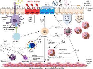 Main pathways involved in type 2 immune response in bronchial asthma © 2018 Xavier Muñoz Gall.