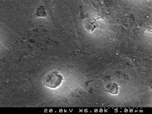 """SEM representative image illustrating the """"conditioned"""" dentin surface after treatment with Clearfil™ S3 Bond Plus (6000×)."""