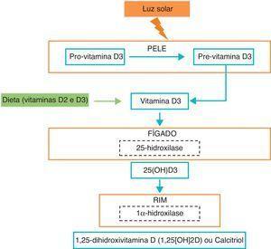 Metabolismo da vitamina D. Adaptado de N Engl J Med 2011;364:248-54.