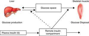 """Schematic equations and parameters for the minimal model of glucose metabolism. Differential equations describing glucose dynamics [G(t)] in a monocompartmental """"glucose space"""" and insulin dynamics in a """"remote compartment"""" [X(t)] are shown at the top. Glucose leaves or enters its space at a rate proportional to the difference between plasma glucose level, G(t) and the basal fasting level, Gb. In addition, glucose also disappears from its compartment at a rate proportional to insulin levels in the """"remote"""" compartment [X(t)]. In this model, t – time; G(t) – plasma glucose at time t; I(t) – plasma insulin concentration at time t; X(t) – insulin concentration in """"remote"""" compartment at time t; Gb – basal plasma glucose concentration; Ib – basal plasma insulin concentration; G(0) – G0 (assuming instantaneous mixing of the iv glucose load); p1, p2, p3 and G0 – unknown parameters in the model that are uniquely identifiable from FSIVGTT; glucose effectiveness (SG) – p1 and insulin sensitivity – p3/p2."""