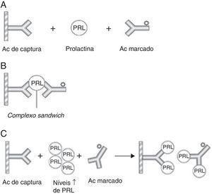 Representação esquemática de um imunoensaio de dois sítios para a prolactina e do «hook effect» (A) Utilizam‐se dois Acs específicos ‐ o Ac de captura (fixo numa matriz de fase sólida) e o Ac marcado (sinalizador) – que se ligam a diferentes epítopos da PRL formando um complexo sandwich. (B) O excesso de Acs marcados não ligados é removido com a fase líquida, restando os complexos sandwich que vão emitir um sinal, o qual é directamente proporcional à concentração de PRL sérica. (C) O «hook effect» verifica‐se quando os níveis de PRL são muito elevados causando a saturação de ambos os Acs (de captura e sinalizador), o que impede a formação dos complexos sandwich com consequente diminuição da detecção quantitativa da PRL. PRL: prolactina; Ac: anticorpo. Adaptado da Smith et al.16.