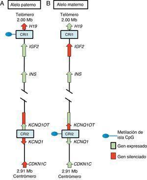 Región improntada en el cromosoma 11p15.5. (A) Cromosoma paterno y (B) cromosoma materno mostrando las diferencias en los patrones de metilación de las regiones de control de la impronta (CRI1 y CRI2) y en la expresión de los alelos de los genes H19, IGF2, KCNQ1, KCNQ1OT y CDKN1C.
