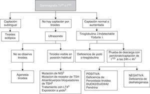 Diagnóstico etiológico de hipotiroidismo congénito primario. 1 El perclorato no está disponible en nuestro medio, pero una captación de I123 que disminuye a las 24 horas en comparación con la captación a las 4 horas orienta a dishormogénesis. 2 NIS: cotransportador de sodio/yodo. 3 TSH: hormona estimulante de la tiroides; LT4: levotiroxina. Puede existir captación baja.