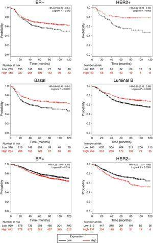 TRPM2 mRNA expression correlates with relapse-free survival in patients with breast cancer. Kaplan-Meier graphs show the relapse-free survival prognosis of breast cancer patients censored at 120 months, based on high or low TRPM2 tumor mRNA expression. Red, patients with expression above the median; black, patients with expression below the median. After splitting the patients by TRPM2 mRNA level, those with low expression had a lower probability of being relapse-free over time when presented ER-, HER2+, Basal or Luminal B subtype. In contrast, high TRPM2 expression patients of ER+ and HER2- breast cancer presented slightly less relapse over time in comparison to their counterpart with low expression.