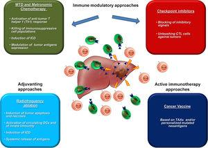 Combinatorial approach for HCC treatment. The available immunological approaches in HCC therapy are shown. A combination of them is foreseen to produce a dramatic increase in clinical outcome in HCC patients.