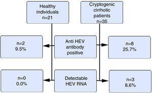 Anti-HEVIgG positivity and measurable HEV RNA in the study group. HEV: hepatitis E virus, IgG: immunoglobulin G, HEV RNA: hepatitis E virus ribonucleic acid.