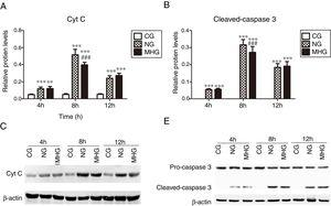 Effects of mild hypothermia on the protein expression of Cyt C and Caspase 3 in hepatic tissues and (B) protein expression levels of Cyt C and cleave-caspase 3, detected by Western blot. (C and D) Representative Western blot images of Cyt C and caspase 3. β-Actin was used as a control. ***P<0.001 vs. CG; ###P<0.001 vs. NG. Cyt C, cytochrome C; CG, control group; NG, normothermia group; MHG, mild hypothermia group.