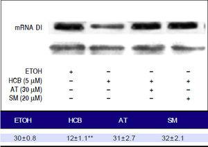 Analysis of the expression of mRNA DI by RT-PCR. Hep-G2 cells were pretreated with AT(30 µM) or SM (20 µM) for 3 h and then HCB (5 µM) for 24 h. L-19 was used as charge control. The results of the bands optica analysis are shown in the bottom panel **p ≤ 0.05 respect HCB.