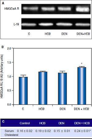 Analysis of HMGCoAR mRNA expression in rat liver and serum cholesterol levels in an initiation-promotion model. A. Representative pattern of RT-PCR amplification of HMGCoAR cDNA from liver of DEN and DEN+HCB treated rats, synthesized from total RNA. B. L-19 was used as a loading control. Quantification of HMGCoAR/L-19 cDNA ratio is shown in the lower panel. C. Serum cholesterol levels. Values are means ± SEM of three independent experiments of four rats per group. Significantly different (*p < 0.05) compared to DEN group.