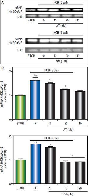 Analysis of statins effect on HMGCoA R mRNA expression in HCB-treated Hep-G2 cells. A. Hep-G2 cells were pretreated with AT (10, 20 and 30 μM) or SM (5, 10 and 20 μM) for 3 h and then treated with HCB (5 μM) for 24 h. B. L-19 was used as a loading control. Representative patterns of RT-PCR amplification of HMGCoAR cDNA from ETOH and statinstreated cells, synthesized from total RNA are shown in the upper panel. Quantification of HMGCoAR mRNA, after correction with L-19 is shown in the lower panel. Values are means ± SEM of three independent experiments. Significantly different (*p < 0.05) compared to ETOH group.
