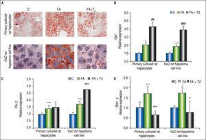 In vitro lipid-lowering effects of T2. Primary rat hepatocytes or FaO hepatoma cells were lipid-loaded with FA mixture as described in the text. After 24 h, the culture medium was replaced and supplemented with T2 at 10-5 M and cells were incubated for further 24 h. A. Representative image of ORO-stained control (C) and FA hepatocytes incubated in the absence or in the presence of T2 (FA + T2). Nuclear staining with hematoxylin is also shown (magnification 40X and 100X). B. Relative mRNA expression of Cpt1 evaluated by RT-qPCR. C. Relative mRNA expression of Plin2 evaluated by RT-qPCR. D. Relative mRNA expression of Pparγ evaluated by RT-qPCR. B-D. Data (means ± SD, N = 4) are reported as fold induction with respect to controls after normalization for Gapdh mRNA. Significant differences are indicated (C vs. FA *p < 0.05, ***p < 0.001; FA vs. FA + T2 #p < 0.05, ##p < 0.01, ###p < 0.001).