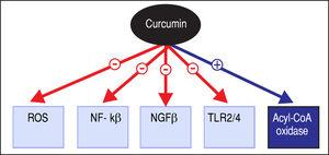 Proposed mechanisms of pharmacotherapeutic action of curcu-min. ROS: Reactive oxygen species. NF-kβ: Nuclear factor kappa B. TGFβ: Transforming growth factor beta. TLR: Toll-like receptor. Acyl-CoA: Acyl-coenzyme A.