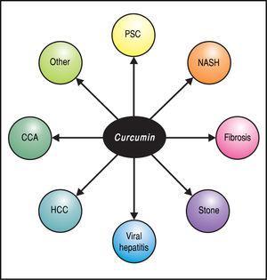 Potential applications of curcumin in hepatobiliary disease. CCA: Cholangiocarcinoma. HCC: Hepatocellular carcinoma. NASH: Nonalcoholic steatohepatitis. PSC: Primary sclerosing cholangitis.