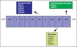 The hepatitis C virus genome and the DAAs (DAAs: Direct – acting antiviral agents).