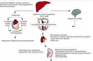 Pathophysiology of circulatory abnormalities and renal failure during cirrhosis. Portal hypertension triggers splanchnic vasodilation and the compensatory activation of the vasoconstrictor system. In the early stages, increases in the cardiac output and plasma volume may restore the effective arterial blood volume, although the sustained activation of vasoconstrictor systems leads to ascites formation, abnormal renal autoregulation, and eventual renal failure in the later stages. A second renal injury, such as hypovolemia or sepsis, may accelerate the progression of renal failure.