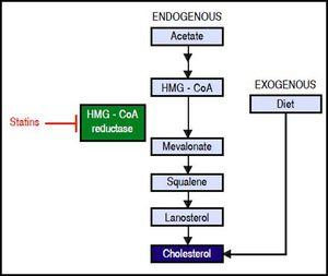 Endogenous synthesis and exogenous acquisition of cholesterol. Schematic representation of endogenous cholesterol synthesis and exogenous cholesterol acquisition from the diet. Statins impairs cholesterol synthesis through the inhibition of HMG-CoA reductase enzyme activity. Statins indirectly impairs HCV genome replication. HMG-CoA: 3-hydroxy-3-methylglutharyl-coenzyme A.
