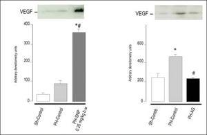 Immnublottintg analysis of VEGF protein expression in total liver lysates fraction at 72 h post-surgery. A. Line 1: Sh-Control, a midline laparotomy with liver manipulation was carried out on surgical sham control rats. Line 2: PHControl, two-thirds hepatectomy was performed to control rats. Line 3: PH-SNP1, twothirds hepatectomy was performed to rats that had received sodium nitropruside 0.25 mg/kg body weight, intravenously. B. Line 1: Sh-Control. Line 2: PHControl. Line 3: PH-AG, twothirds hepatectomy was performed to rats that had received aminoguanidine (AG) 100 mg/kg body weight, intraperitoneally. *p < 0.05 vs. Sh-Control. #p < 0.05 vs. PH-Control (Ronco, et al. 2007).