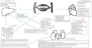 Pathophysiologic pathways linking the liver, heart, kidney and gut in patients with advanced cirrhosis.