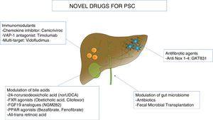Novel drugs for Primary Sclerosing Cholangitis (PSC). norUDCA, 24-norursodeoxicholic acid; FXR, farnesoid X receptor; FGF19, fibroblast growth factor 19; PPAR, peroxisome proliferator-activated receptor; VAP-1, vascular adhesion protein 1.