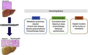 Factors favorizing CASH lesions.