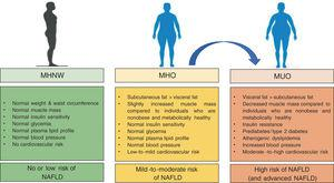 Main differences in metabolically healthy (MHO) and metabolically unhealthy obesity (MUO) [when compared with metabolically healthy normal weight individuals (MHNW)].