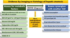Assumed criteria for MAFLD diagnosis. MAFLD; metabolic-associated fatty liver disease, HDL; high-density lipoprotein, HOMA-IR; homeostatic model assessment of insulin resistance, BMI; body mass index, CLD; chronic liver disease, HCV; hepatitis C virus.
