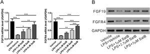 Salvianolic acid B restores LPS induced FGF19 and FGFR4 downregulation. LX-2 cells were treated with different concentrations of salvianolic acid B, as indicated, with or without 100ng/mL LPS. (A) Fibroblast growth factor (FGF19) and FGF receptor 4 (FGFR4) mRNA levels were measured by quantitative reverse transcription polymerase chain reaction. (B) FGF19, FGFR4, and glyceraldehyde 3-phosphate dehydrogenase protein levels were measured by western blotting. Values represent mean±standard deviation (n=5). *P<0.05, **P<0.01, ***P<0.001.