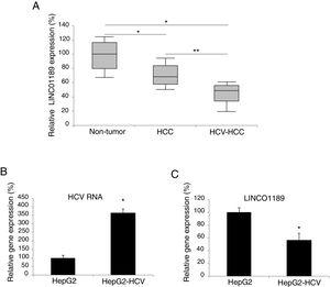 LINC01189 may be closely associated with HCV infection in HCC. (A) Expression of LINC01189 was probed, by qRT-PCR in paired HCC tumor tissues and adjacent non-tumor tissues (n=67) (* P<0.05). In addition, LINC01189 was also probed in a sub-set of HCV-infected HCC tumors (n=21) (** P<0.05). (B) A HCC cell line, HepG2 was infected with HCV virus. After that, HCV RNA expression levels were compared, by qRT-PCR, between infected (HepG2-HCV) and un-infected cells (* P<0.05). (C) Relative expression of LINC01189 in infected (HepG2-HCV) and un-infected HepG2 cells was probed by qRT-PCR (** P<0.05).