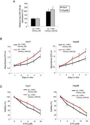 LINC01189 -mediated HCC proliferation and chemoresistance was regulated by hsa-miR-155-5p. (A) Pc_1189-transfected Huh7 and Hep3B cells were double-transfected with a hsa-miR-155-5p mimics (mimics_miR155) or a non-specific miRNA mimics (mimics_NS). QRT-PCR was used to compare endogenous hsa-miR-155-5p expression levels (* P<0.05). (B) CCK-8 assay was conducted to compare proliferation in HCC cells transfected with pc_1189 / mimics_miR155 and those transfected with pc_1189 / mimics_NS (* P<0.05). (C) For double-transfected Huh7 and Hep3B cells, they were incubated with 5-FU at 0, 2, 5, 10 and 20μM for 24h. After that, chemoresistance was compared using a viability assay (* P< 0.05).