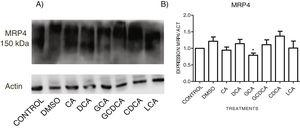 Western Blot analysis of MRP4 expression in bile salts treated cells. Cells were treated with bile salt as described, GRAPH. 4. Relative expression of MRP4. Densitometric quantification from Fig. 5. <span class=
