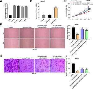 The anti-tumor effect of LINC01006 knockdown on HCC cells was partially reversed by miR-433-3p inhibition or CBX3 overexpression. A, CBX3 expression in HCC cell lines was measured by qRT-PCR. ** P<0.01 vs. L-02. B, CBX3 expression in pcDNA-CBX3-transfected HeP3B cells was detected by qRT-PCR. ** P<0.01 vs. Blank. C, Cell viability of co-transfected HeP3B cells was determined by MTT assay. D, Wound healing assay was carried out to detect the migration of co-transfected HeP3B cells. E, Transwell assay was performed to detect the invasion of co-transfected HeP3B cells. ** P<0.01 vs. sh-NC; ## P<0.01 vs. sh-LINC01006-1.
