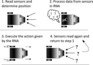 Algorithm for decision-making using RNA-BP