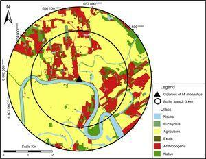 Example of map classification to quantify landscape composition. The amount of each landcover class was calculated within two circular buffers areas (with 2 or 3km radius), centered at the colony or potential nesting sites for Myiopsitta monachus.