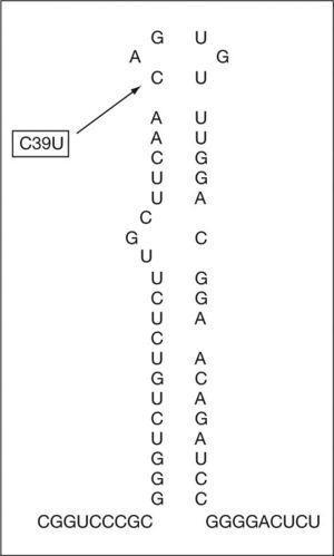 ARNm del IRE del gen de la L-ferritina: posición de la mutación del paciente en el bucle del IRE.
