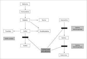 Alteraciones del metabolismo por defecto del cofactor molibdeno.