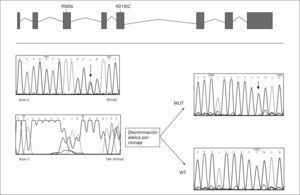Gen MPI y secuencia de las mutaciones identificadas en el ADN del paciente con defecto congénito de la glucosilación Ib.