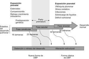 Fases del desarrollo pulmonar, daños potenciales y tipos de alteración pulmonar.