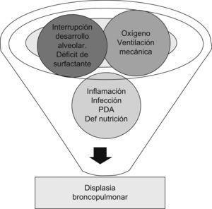 Factores que contribuyen al desarrollo de la displasia broncopulmonar.