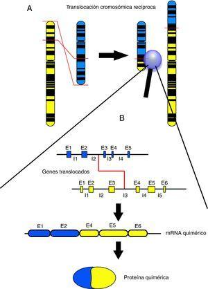 A: Visión esquemática de una translocación recíproca a nivel cromosómico. Un fragmento del cromosoma amarillo se intercambia por un fragmento del cromosoma azul. B: Visión esquemática del punto de corte de una translocación recíproca a nivel génico, con el producto de ARN resultante y la proteína quimérica por la que codificaría. E1, E2, E3, etc. corresponden con los segmentos génicos codificantes (exones). I1, I2, I3, etc. corresponden a los segmentos génicos no codificantes, que separan exones y que suelen ser mucho más extensos que éstos (intrones). El punto de corte de las translocaciones suele encontrarse dentro de segmentos intrónicos.