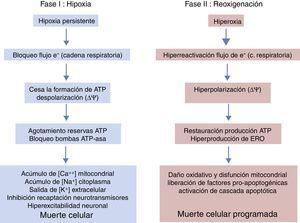 Fases de la encefalopatía hipóxico-isquémica.