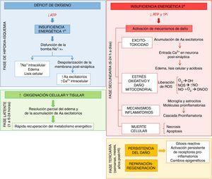 Principales mecanismos desencadenados tras la asfixia en las fases de hipoxia-isquemia (HI, azul), latente (verde), secundaria (rojo) y terciaria (naranja). Aa: aminoácidos; ATP: adenosín trifosfato; Ca2+: ion calcio; K+: ion potasio; Na+: ion sodio; NO.: óxido nítrico; NOS: especies reactivas del nitrógeno; O2–.: anión superóxido; OH.: radical libre hidroxilo; ONOO-: peroxinitrito; Pi: fósforo inorgánico; ROS: especies reactivas del oxígeno.