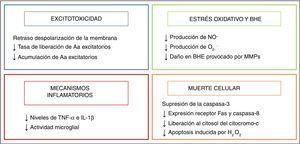 Efecto de la hipotermia sobre los mecanismos de daño. Aa: aminoácidos; BHE: barrera hematoencefálica; H2O2: peróxido de hidrógeno; IL-1β: interleucina 1β; MMP: metaloproteasas de la matriz; NO.: óxido nítrico; O2–.: anión superóxido; TNF-α: factor de necrosis tumoral α.