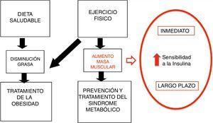 Mecanismos de la AF en la prevención y tratamiento de la obesidad. Modificado de Brambilla et al.14.