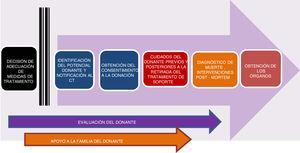 Fases del proceso de donación en asistolia controlada pediátrica (modificada de Thuong et al.8).