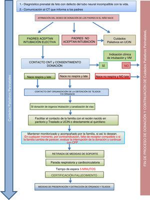 Proceso de donación de órganos y tejidos en neonatos con anencefalia4.
