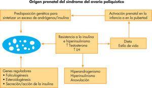 Fisiopatología del síndrome del ovario poliquístico: origen prenatal. Modificada de Franks3.