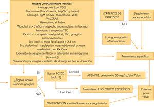 Protocolo de actuación: adenopatías localizadas. CMV: citomegalovirus; Eco: ecografía; EGA: estreptococo grupo A; Rx: radiografía; TBC: tuberculosis broncopulmonar; VEB: virus de Epstein-Barr; VSG: velocidad de sedimentación globular.
