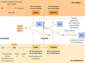 Vías del complemento, factores reguladores, actuación del Eculizumab